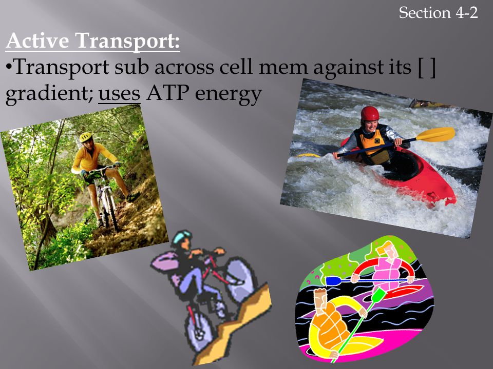 Section 4-2 Active Transport: Transport sub across cell mem against its [ ] gradient; uses ATP energy.